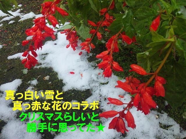富山県内平野部初雪 (2)