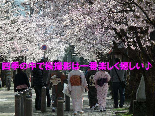 桜撮影は四季の中で大好き
