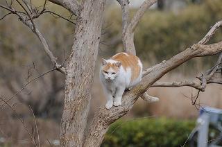 猫DSC_4555s-