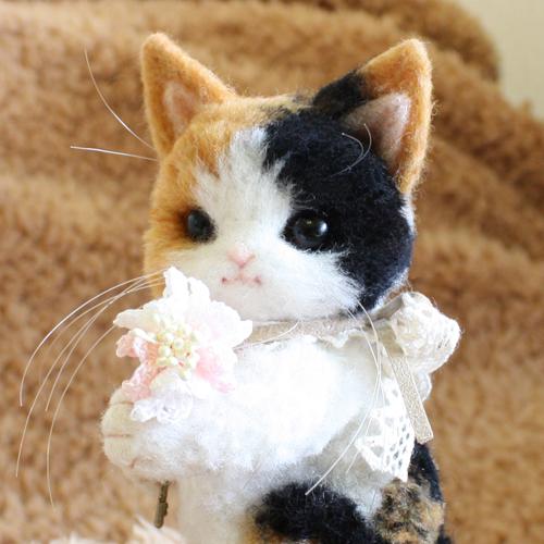 三毛猫テディ1