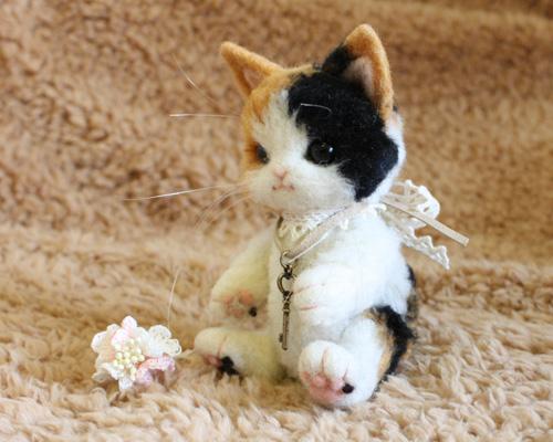 三毛猫テディ7