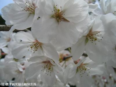 banzui2008040406.jpg