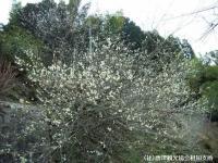 hotaruhashi2008030204.jpg