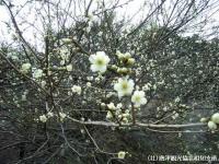 hotaruhashi2008030205.jpg