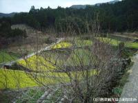 tanada2008032112.jpg