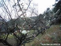tanada2008032906.jpg