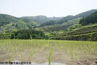 tanada2008052707.jpg