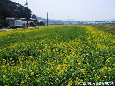 yamasaki2008032301.jpg