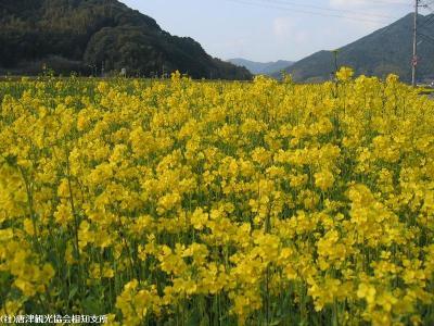 yamasaki2008033101.jpg