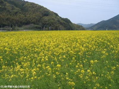 yamasaki2008042301.jpg