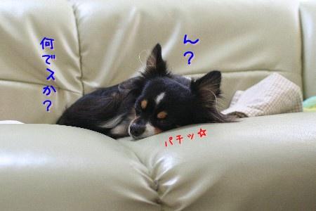 091015a.jpg