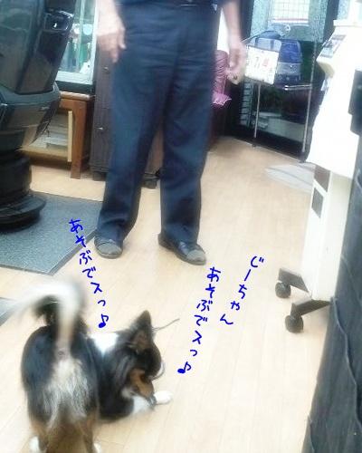091125a_20091125095528.jpg
