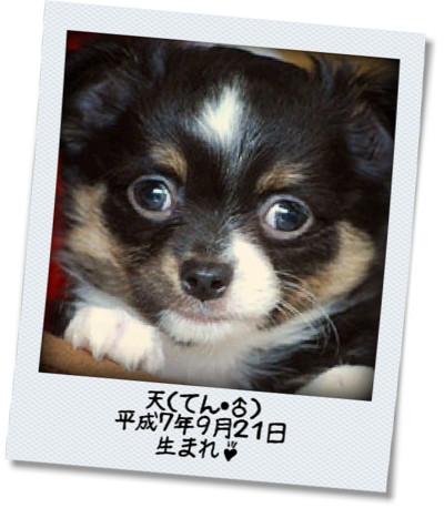 photokako125454131539531.jpg