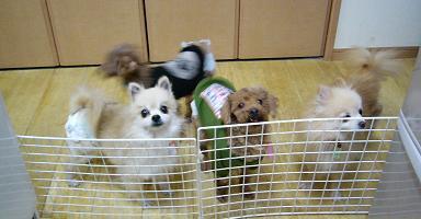 20111219 010harunatuakifuyu