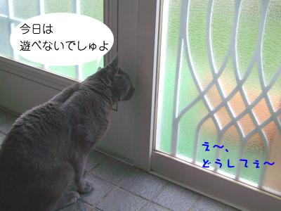 DSCF3769.jpg