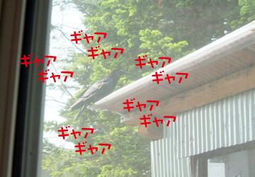 DSCF4106.jpg