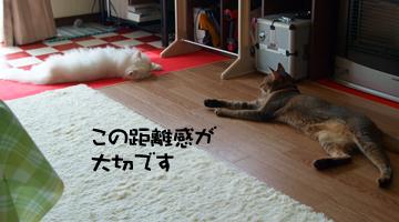 DSCF6337.jpg