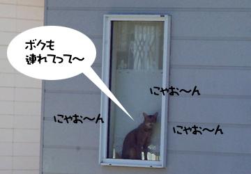 DSCF7131.jpg