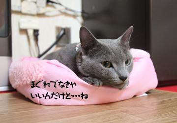 IMG_5324.jpg