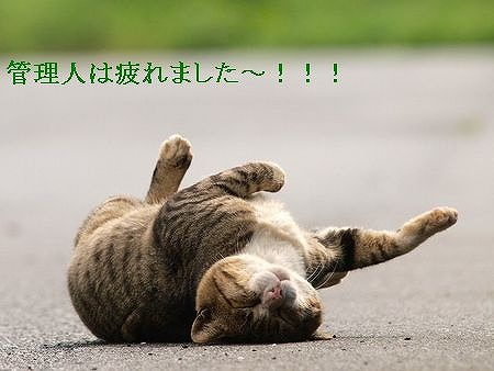 s-猫が倒れた(1)
