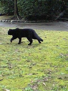 公園の猫 002