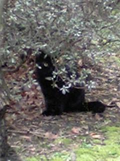 公園の猫 001