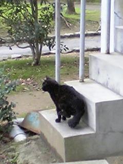 公園の猫 012
