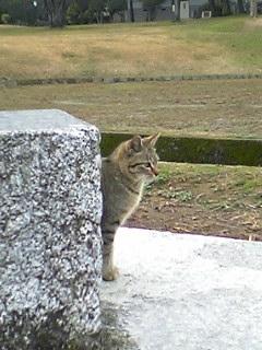 公園の猫 020