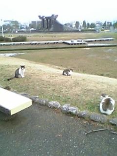 公園の猫 036