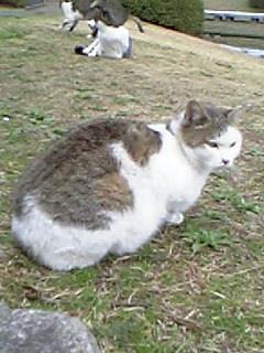 公園の猫 037