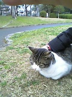 公園の猫 043