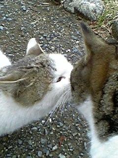 公園の猫 047