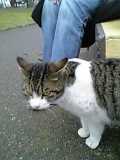 公園の猫 046