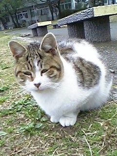 公園の猫 056