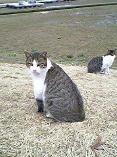 公園の猫 052