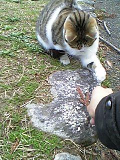 公園の猫 057