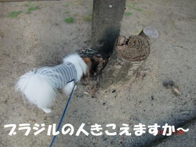 009_convert_20120203214258.jpg