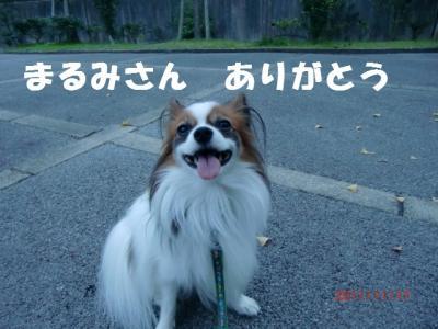 023_convert_20111123230036.jpg
