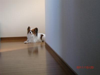 025_convert_20111020113144.jpg