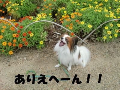 051_convert_20111002194836.jpg