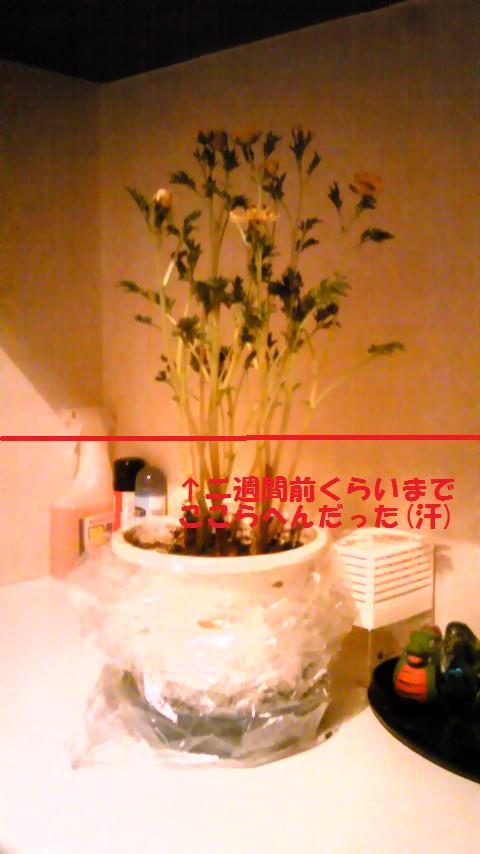PAP_0498.jpg