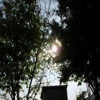 DSCN6624_convert_20091017093711.jpg