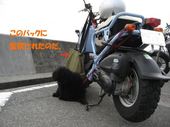 ゴンゾ、バイクに乗る