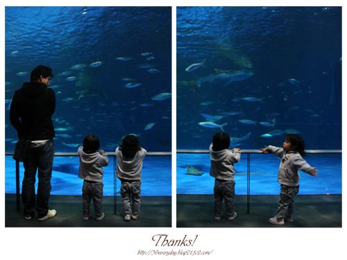 水族館へ。