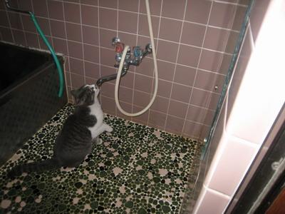 IMG_0762風呂場