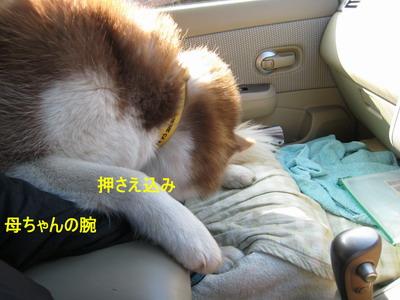 IMG_0964小僧