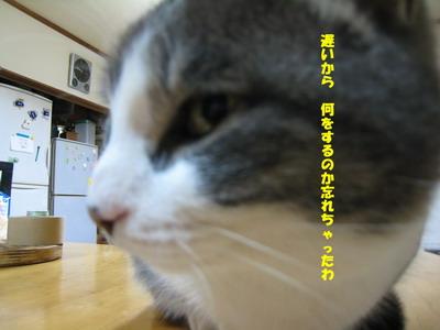 IMG_1196ぷう