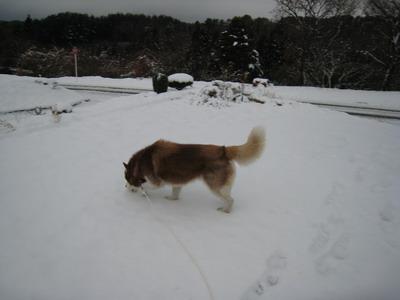 IMG_1345雪