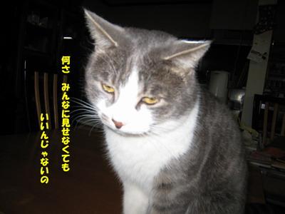 IMG_1614ぼやき