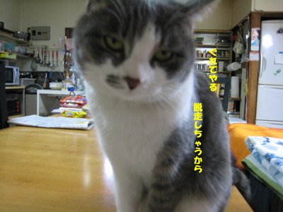 IMG_1615ぷう